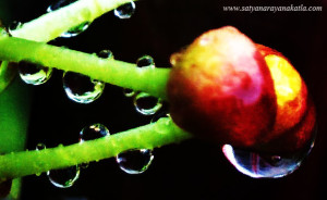 """Everything in our world, even a drop of dew is a microcosm of the universe""~Emerson."